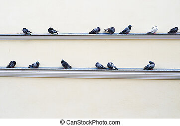 flock of pigeons sitting on the ledge of the building -...