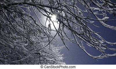 Snow-covered branches during a blizzard in the light of a lamp in the evening