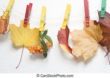 colorful leaves and rowan berries hanging on the string