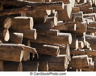 Tree trunks stacked, close up