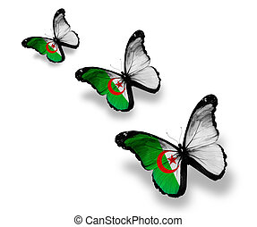 Three Algerian flag butterflies, isolated on white