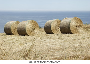 Round Hay Bails on a New Zealand Farm