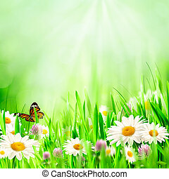 Beautiful spring backgrounds with chamomile flowers