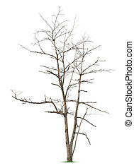 Leafless tree on white background