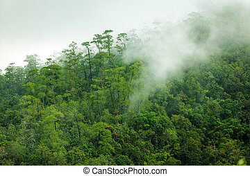 Tropical forest morning - Tropical forest early morning...