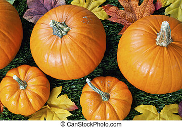 576 cropped view of halloween pumpkins with autumn leaves -...