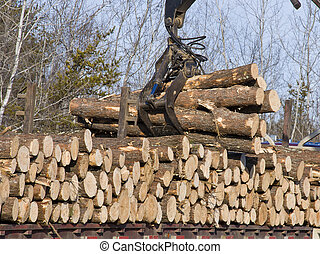 Stacking logs - Stacking fresh cut logs on to a truck for...