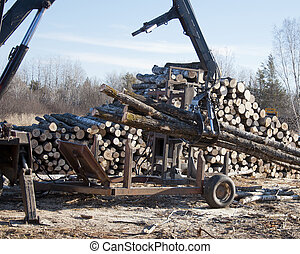 Processing Logs - Processing freshly cut logs