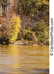 Yellow Tree on Bank of Muddy River - A yellow tree on the...