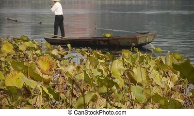 Vast lotus pool,Fisherman on boat clean lake in beijing.
