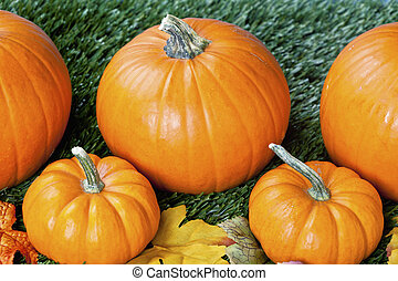 942 cropped view of halloween pumpkins - Overhead view of...