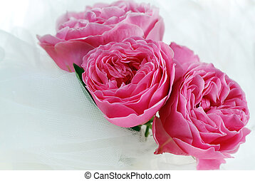 Pink Rose - Close up to Pink Roses in white tulle