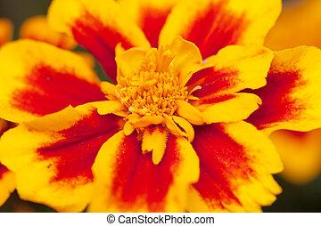 flower 2 - Macro photo of yellow red flower