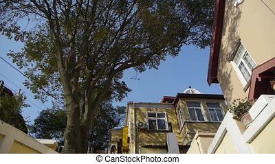 Panoramic of Tree with old house
