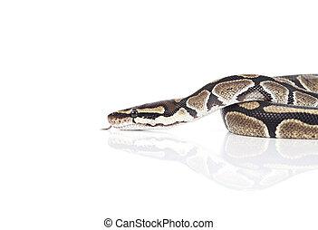 python, real