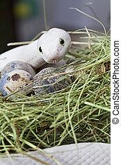 Texas rat snake in a bird's nest - White Texas rat snake on...