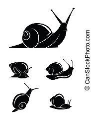 escargot, ensemble, collection