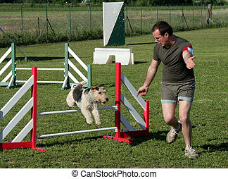 agility - training of agility