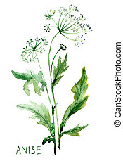 Watercolor illustration of Anise
