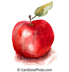 Apple illustration - Stylized watercolor apple illustration