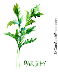 Parsley, watercolor illustration