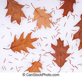Leaves on the snow