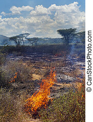 Wildfire in African savanna, Kenya