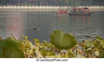 Vast lotus leaf pool in autumn beijing and lake railings -...