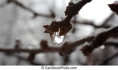 Drop of water a branch - Melting snow is accompanied by...