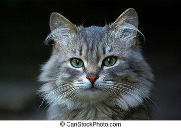 cat - Portrait of young cat