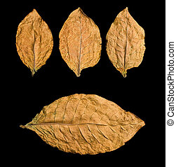 dry leafs on black background