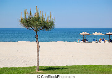 The beach with pine tree, Halkidiki, Greece