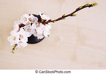 apricot top view - spring bouquet of blooming apricot top...