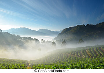 beautiful strawberry farm and mountaineer among mountain and...