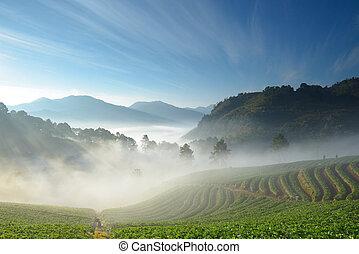 hermoso, fresa, granja, alpinista, Montaña, Niebla