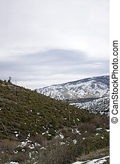 Snow mountains with logged hill - A logged side of a hill...