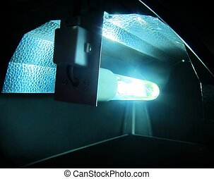 hydroponic, lumière, /, éclairage,...