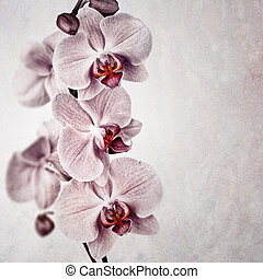 Pink orchid vintage - A delicate pink orchid on faded...