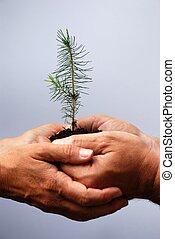 poco, árbol, dos, tenencia, Manos
