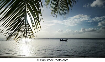 the beach with palm - Palm branch before the sun getting...