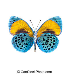 Butterfly on a white background in high definition -...