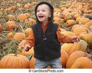 Toddler Boy Playing in the Pumpkins - A young boy plays in a...