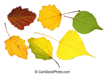 Colorful leaves collection