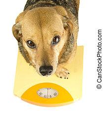 a dog weigh