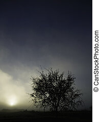 Tree Silhouette - Tree silhouette against a foggy sky in a...