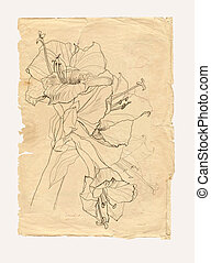 Hibiscus drawing on old paper - Hibiscus flower drawing on...