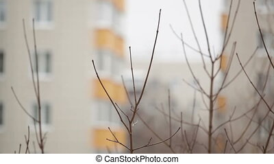 Tree branches and building at the background.