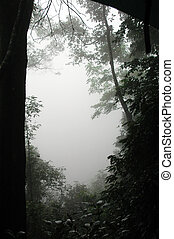 Spooky Trees - Spoky atmospheric shot of a rainforest in...