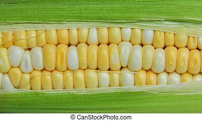 milho, cob, entre, verde, folhas