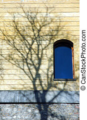 Tree Shadow Window - Shot of a shadow of a tree, cast onto a...